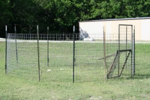 Corral trap with a rooter gate set with t-posts