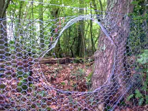 Picture of a chicken wire fence with a big hole where a feral hog has passed through.